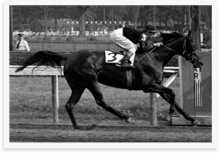 Busanda in the 1951 Saratoga Cup. Bob Coglianese photo.