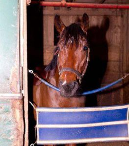 Bullet Catcher at Laurel. Photo courtesy of Gina Rosenthal and Robin Coblyn