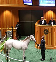FTSaratogaSale2014Hip81bFTPhoto225 credit Fasig Tipton photo