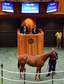 Hip 436, 2014 NY Bred Preferred Yearling sale