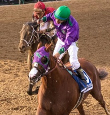 California Chrome Preakness MJC McCue