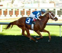 Metaboss El Camino Real Derby Shane Micheli Vassar Photography