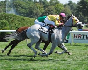 Sportswriter Stallion Series NYRA