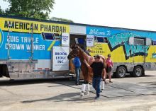 Triple Crown Champion American Pharoah is led off the van by Assistant Trainer Jim Barnes at the Monmouth Park Barn Area on Wednesday afternoon July 29, 2015 in Oceanport, N.J. American Pharoah, who arrived from California, will be the heavy favorite in Sunday's Grade 1 Haskell Invitational.  Photo By Bill Denver/EQUI-PHOTO.