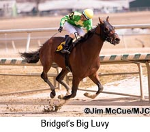 Bridget's Big Luvy winning the Private Terms Stakes at Laurel. Consigned by Dark Hollow Farm, he brought the second-highest price at the 2013 Fasig-Tipton Midlantic yearling sale