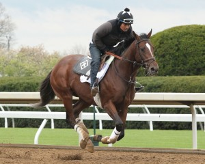 Brody's Cause training at Keeneland. Keeneland photo.