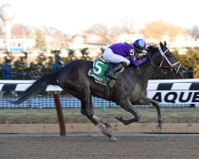 Mo d'Amour and Chris DeCarlo winning the Busher at Aqueduct. NYRA/Chelsea Durand