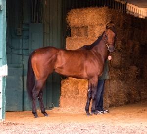 Maryland Jockey Club photo